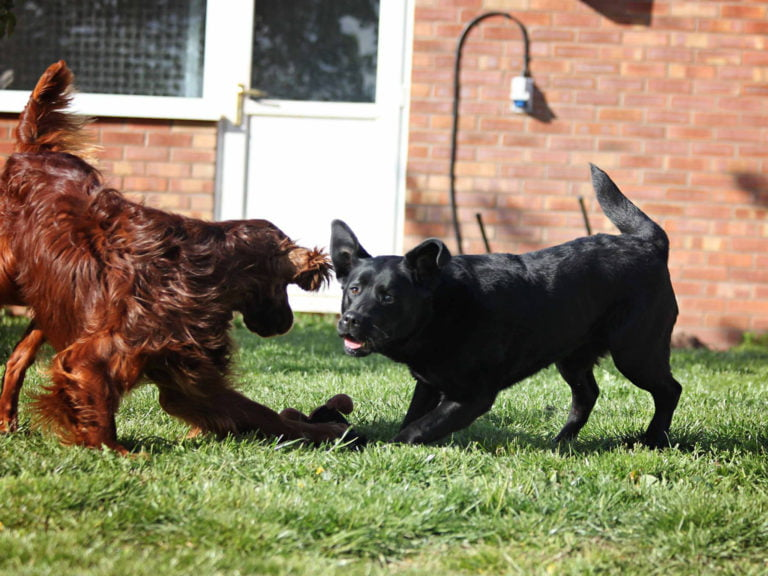 Doggy Pla
